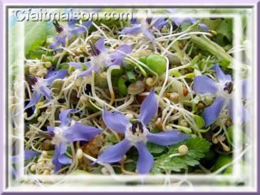 Cuisine Des Fleurs Recettes Avec Des Fleurs Cuisiner Les Fleurs Et