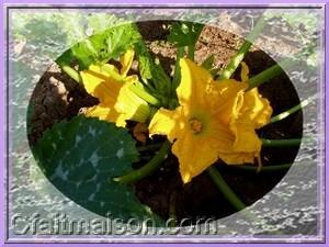 Cuisine des fleurs recettes avec des fleurs cuisiner les fleurs et gastronomie florale - Cuisiner les fleurs de courgette ...