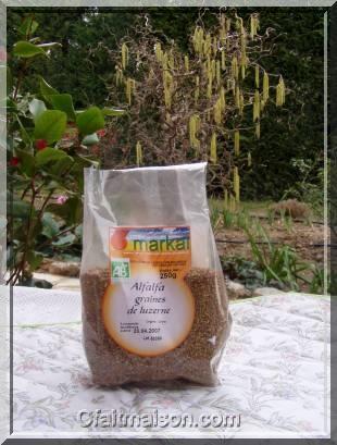Alfalfa ou luzerne, graines à germer