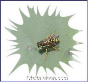 Soigner les piq res d 39 insectes et morsures de nuisibles rem des d 39 antan et soins naturels - Soulager une piqure de guepe ...